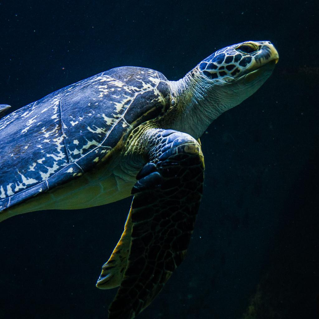 http://fredetsev.eu/galeriesLR/aquarium_vienne_animaux/content/images/large/IMG_8140.jpg