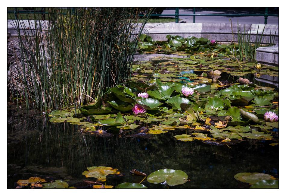 http://fredetsev.eu/imagespourblog/apnmaman_zoo_vienne_fleurlotus.jpg