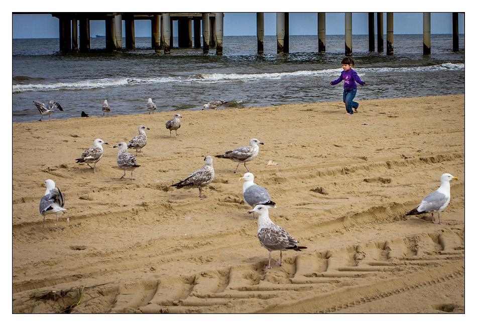 http://fredetsev.eu/imagespourblog/elizabeth_chasse_oiseaux_plagepaysbas.jpg